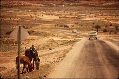 Horses Along Roadway in Northeastern Arizona