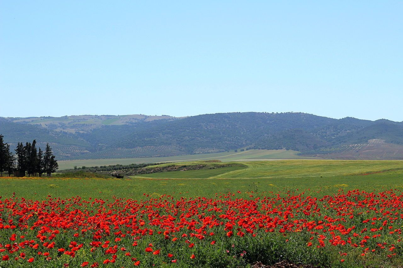 Poppy Field, Tunisia
