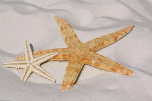 Starfish on Beach - Art 4 Charities, LLC