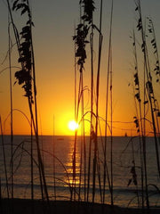 Sun and Sea Oats