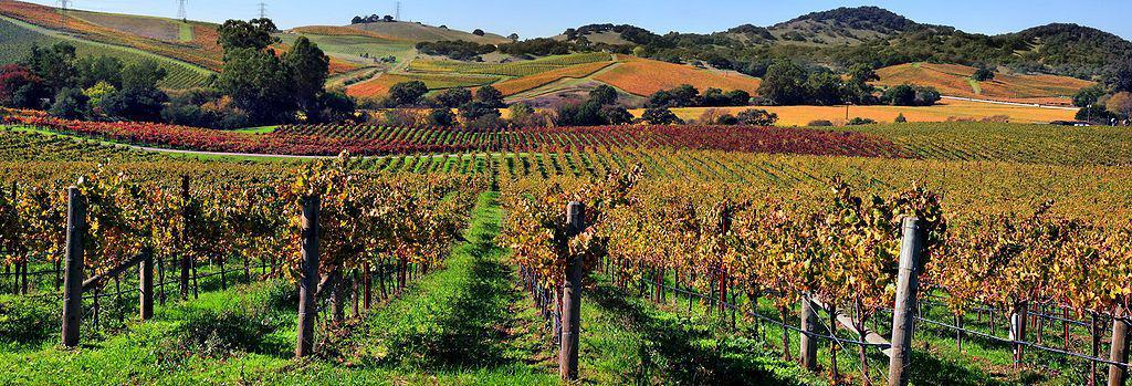 Vineyards in Napa Valley, California