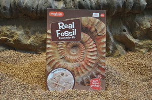 Excavation Kit - Real Fossils