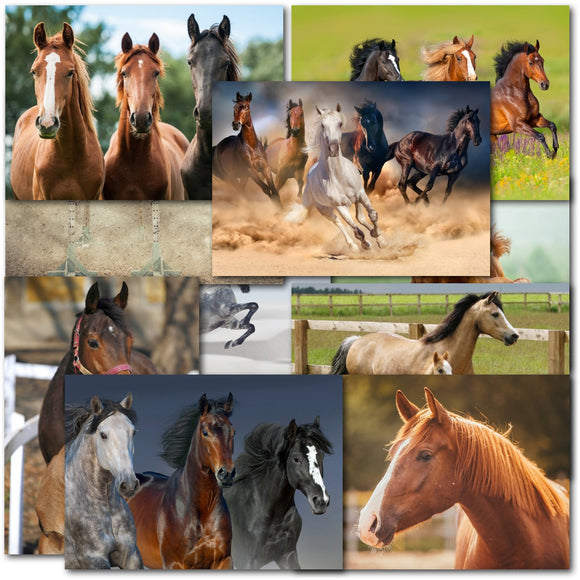 Doodlecards Pack of 10 Standard Size Horse Lovers Birthday & Blank Cards