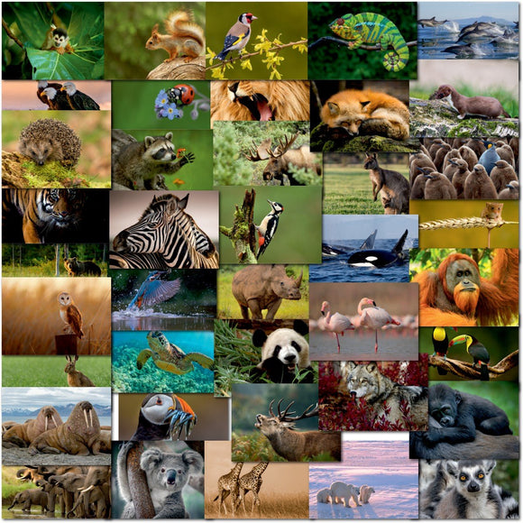 Pack of 40 Mixed Postcards All Different Wildlife Pets Animals