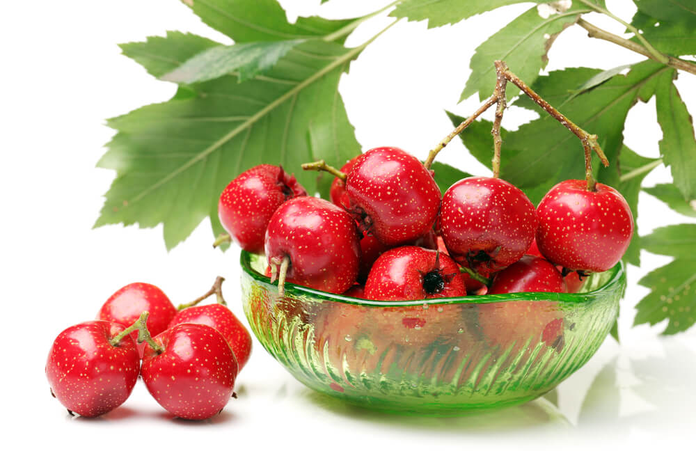 top benefits of hawthorn berry