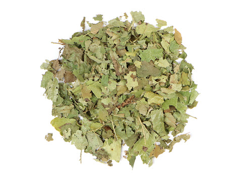 Witch Hazel Leaf - Euphoric Herbals