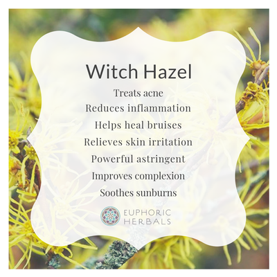 Witch Hazel Leaf