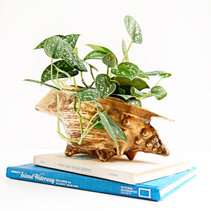 Brass Shell Planter/Trinket Dish (Free Shipping)