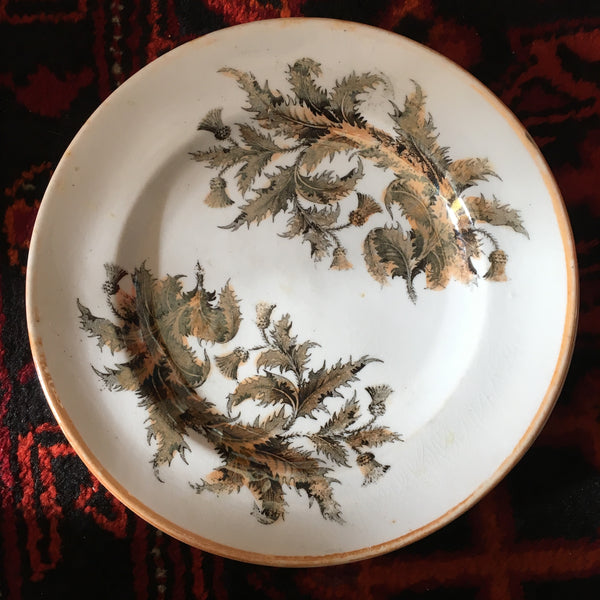 British Transferware Thistle Pattern Plates