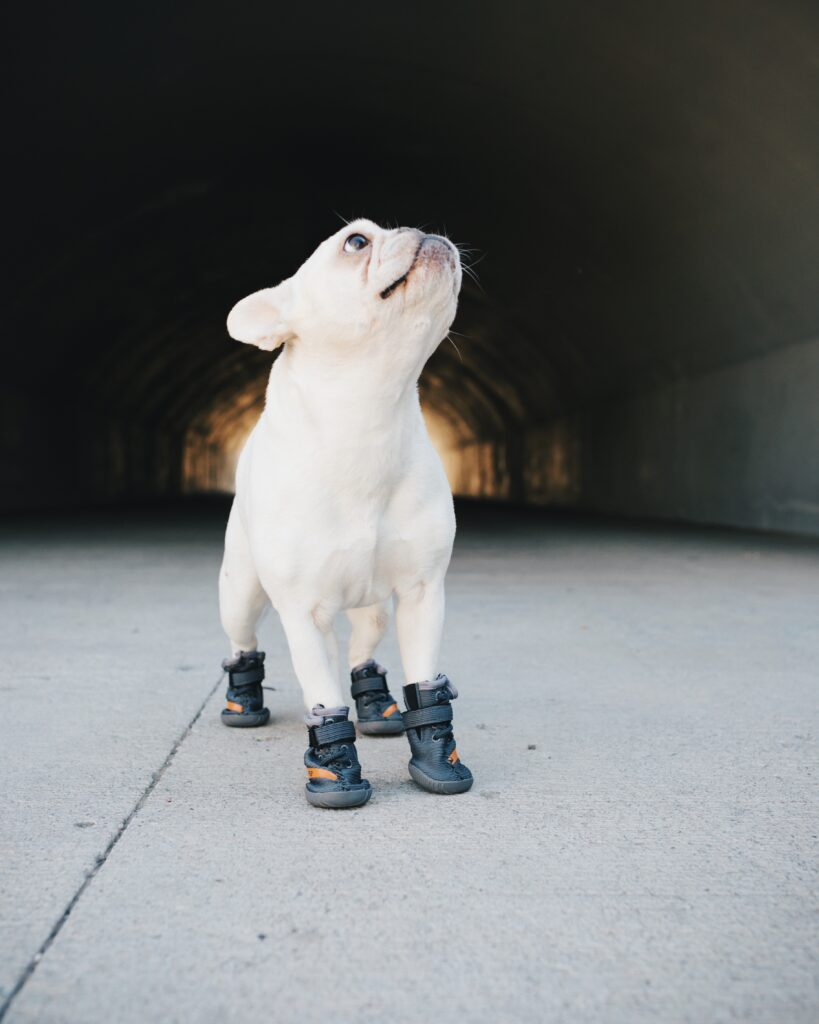 Breaking News: Dogs DO Need Shoes!