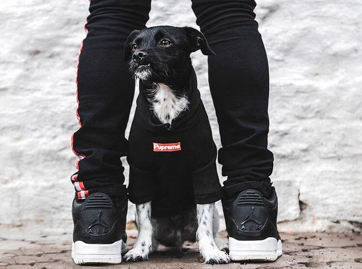 Do Dogs Really Like Wearing Clothes?