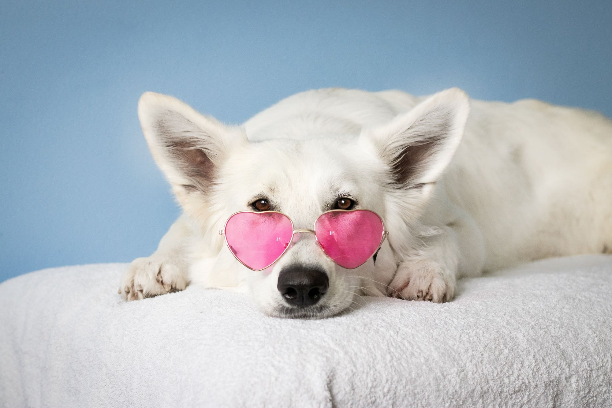 Top 5 Photography Tips for Your Canine Valentine
