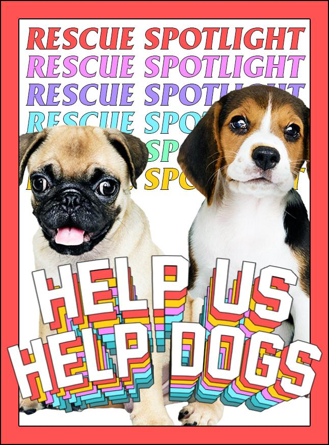 Rescue Spotlight