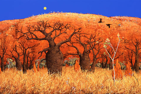 """Boabs and kapok"" Giclee - Windram Art"
