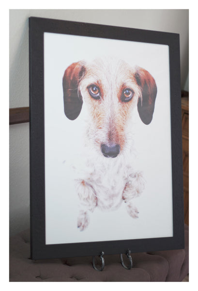 Original Artwork - Wirehair Wes