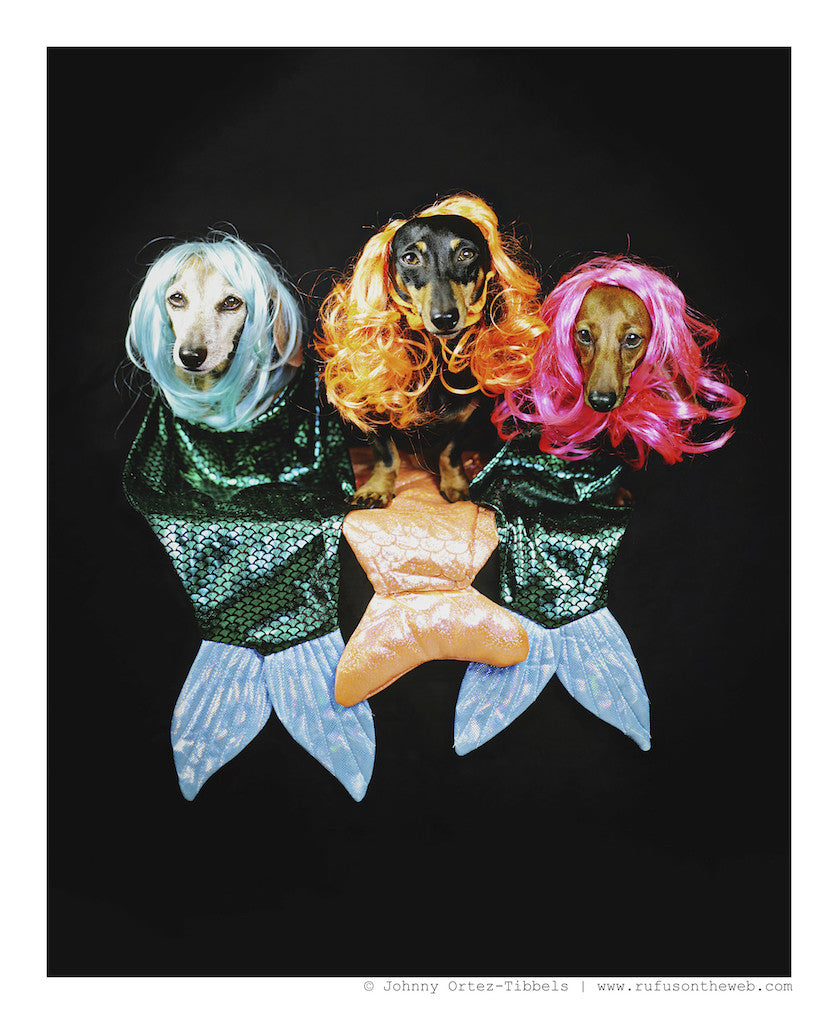 Original Artwork - Dachshund Mermaids