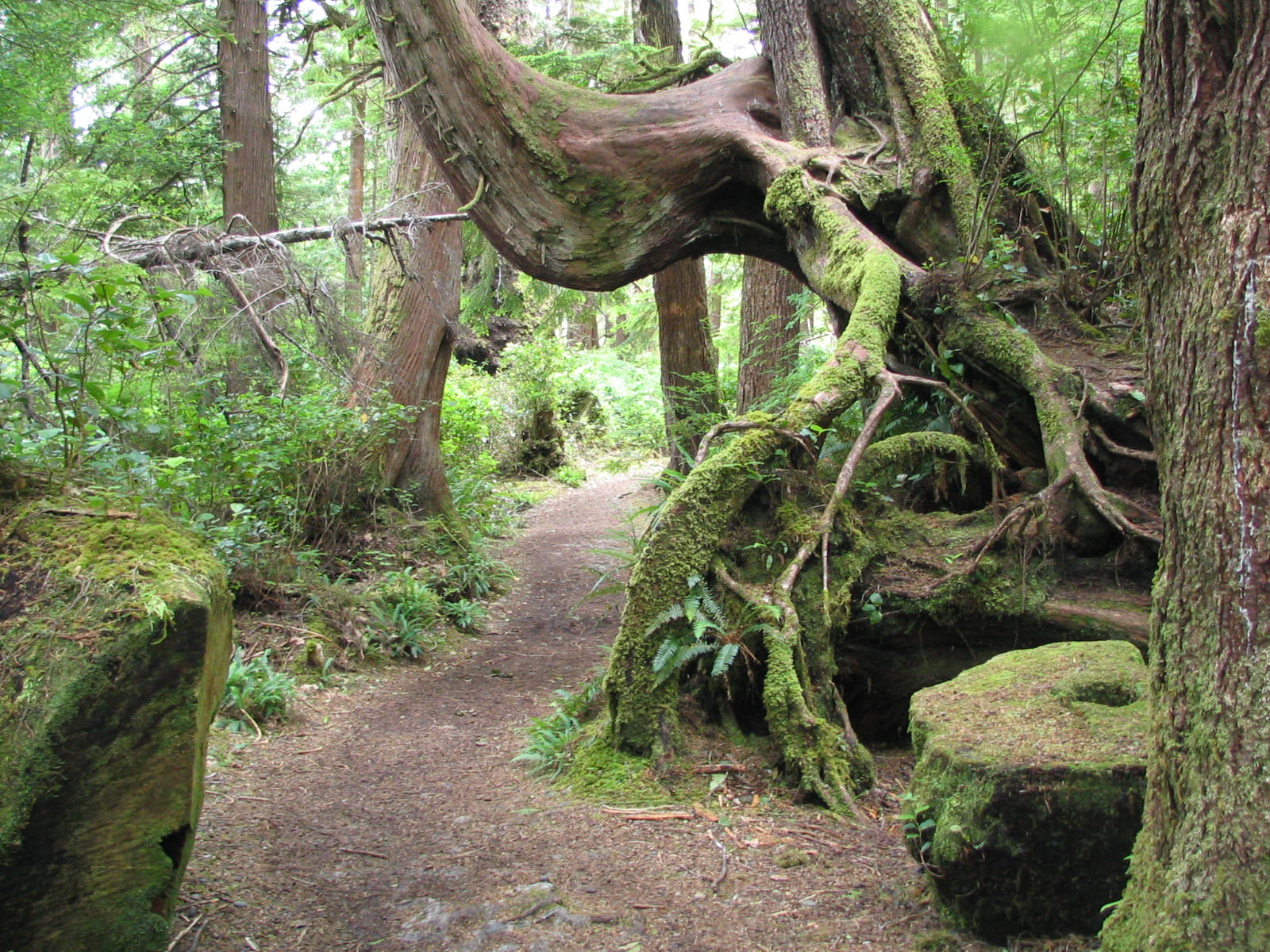 Cape Scott Trail: A primer