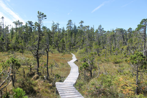 North Coast Trail overland bog boardwalk