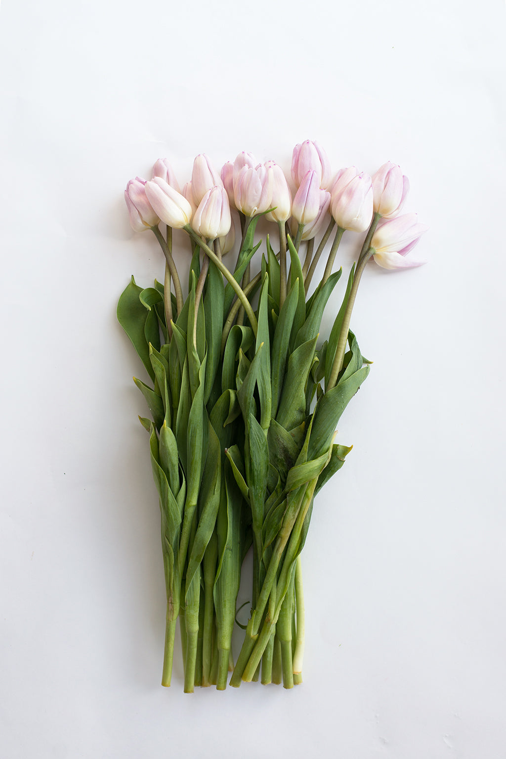 blush tulip wedding