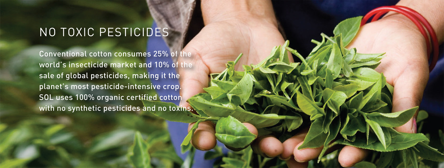 Impact No Toxic Pesticides