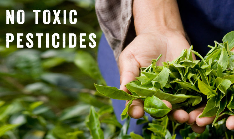 No Toxic Pesticides