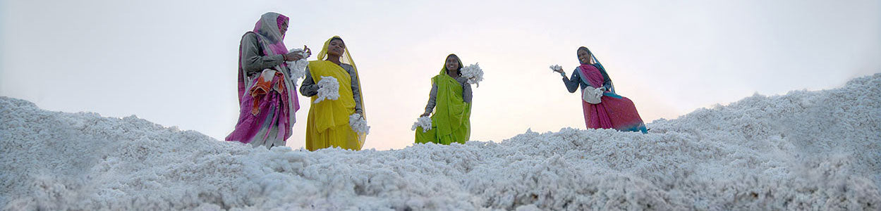 Certified Organic Cotton Farm, Organic Cotton Boll, Organic Cotton Plant, GOTS certified, Global Organic Textile Standard
