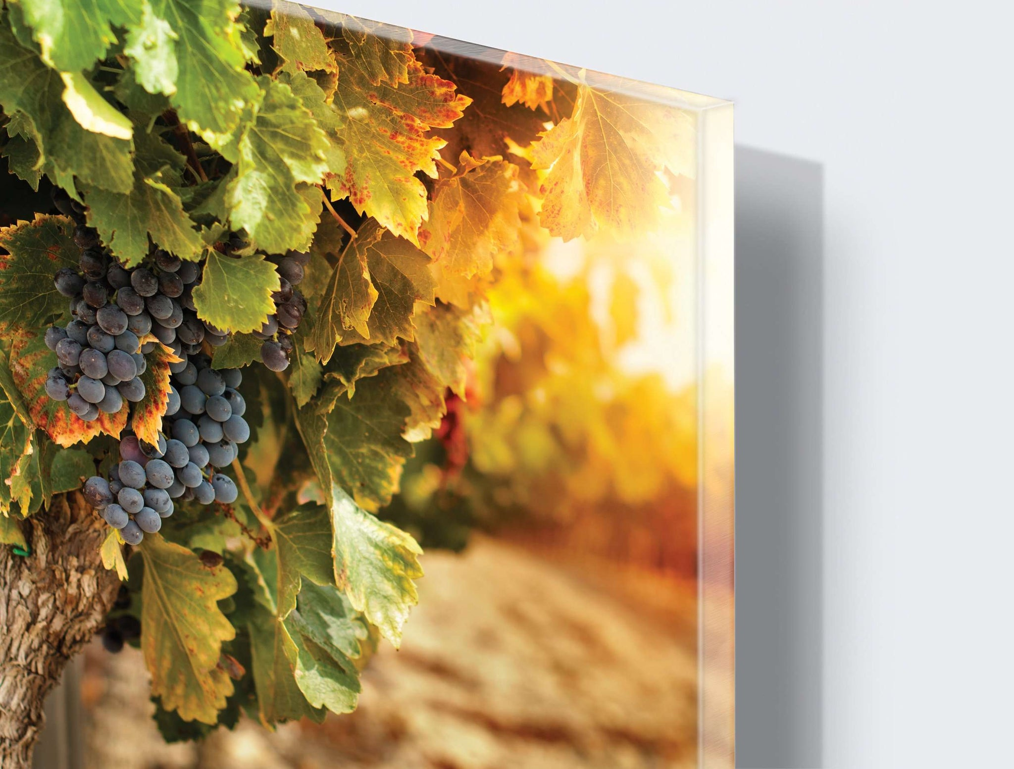 Art zidne slike Grapes - AP037