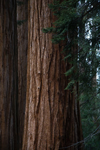 The Best Things to See While Visiting Redwood National Park