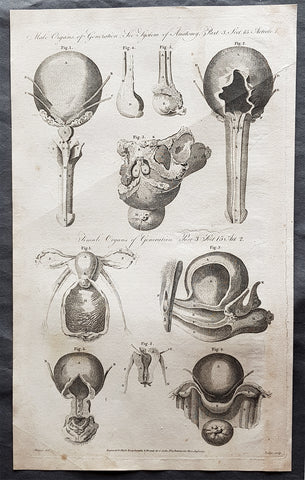 1795 William Henry Hall Large Antique Print of Male & Female Reproductive System