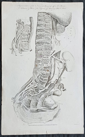 1795 William Hall Antique Print The Human Nervous System Thorax Abdomen & Pelvis