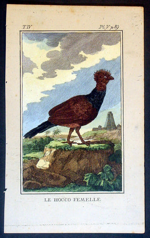 1760 De Buffon Antique Bird Print of a Female Blue-knobbed Curassow of Colombia