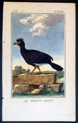 1760 De Buffon Antique Bird Print of a Male Blue-knobbed Curassow of Colombia