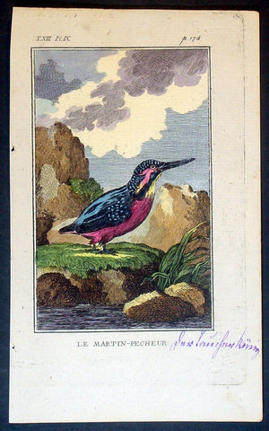 1760 De Buffon Antique Bird Print of a Kingfisher - Le Martin-Pecheur