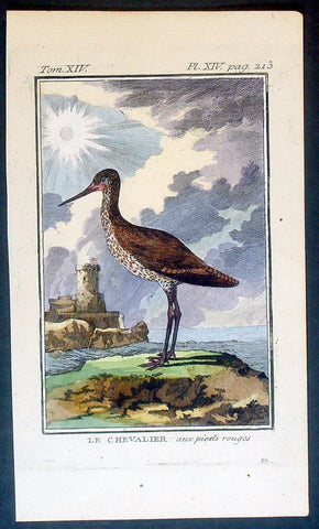 1760 De Buffon Antique Bird Print of The Chevalier Bird or Sandpiper