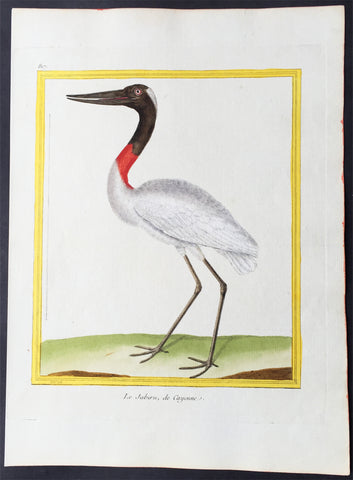 1765 De Buffon Large Folio Antique Bird Print - The American Jabiru Stork
