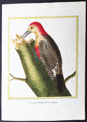 1775 Comte De Buffon Antique Imperial Ornithology Print The Jamaican Woodpecker - Rare Imperial edition
