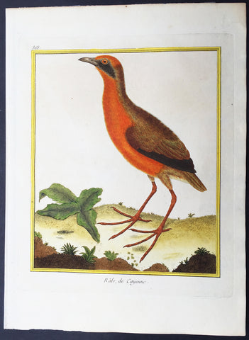 1765 De Buffon Large Antique Folio Ornithological Print Grey-Necked Wood Rail
