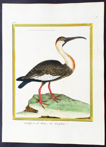 1775 Comte De Buffon Antique Ornithology Print The American Long Billed Curlew - Rare Imperial edition