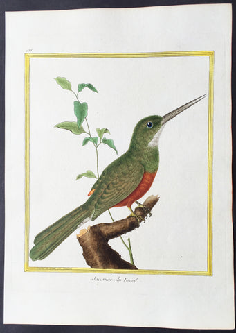 1765 De Buffon Large Folio Antique Bird Print of Rufous-Tailed Jacamar, Brasil