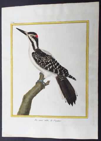 1765 De Buffon Large Antique Folio Bird Print of North American Hairy Woodpecker