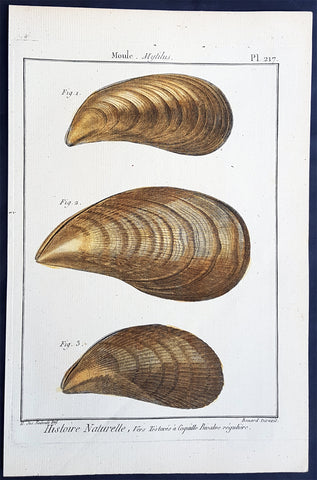 1789 Lamarck & Redoute Antique Concology Print of Mussel Shells, Pl 217