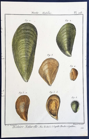 1789 Lamarck & Redoute Antique Concology Print of Mussel Shells, Pl 218