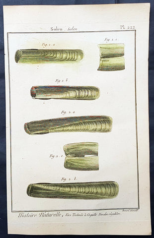 1789 Jean Baptiste Lamarck Antique Concology Print, Seawater Clam Shells, Plate 222