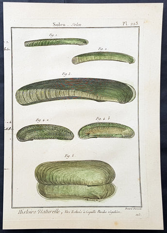 1789 Jean Baptiste Lamarck Antique Concology Print, Seawater Clam Shells, Plate 223