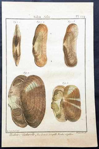 1789 Jean Baptiste Lamarck Antique Concology Print, Seawater Clam Shells, Plate 224