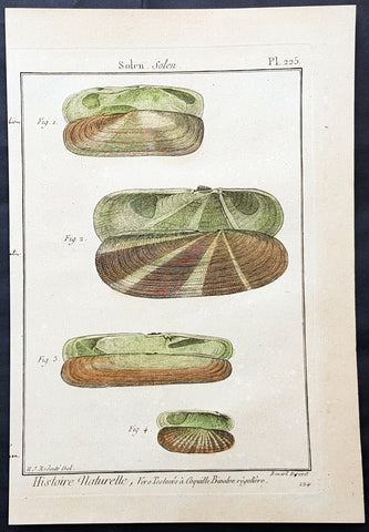 1789 Jean Baptiste Lamarck Antique Concology Print, Seawater Clam Shells, Plate 225