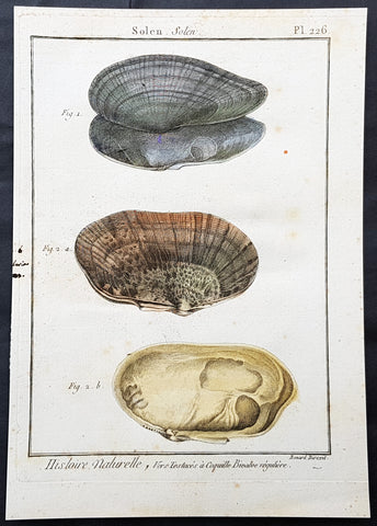 1789 Jean Baptiste Lamarck Antique Concology Print, Seawater Clam Shells, Plate 226