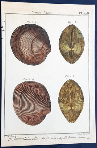 1789 Lamarck & Redoute Antique Concology Print - Venus or Clam Shells, Pl 278