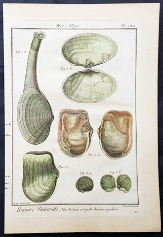 1789 Jean Baptiste Lamarck Antique Concology Print, Soft Shell Clam, Plate 229