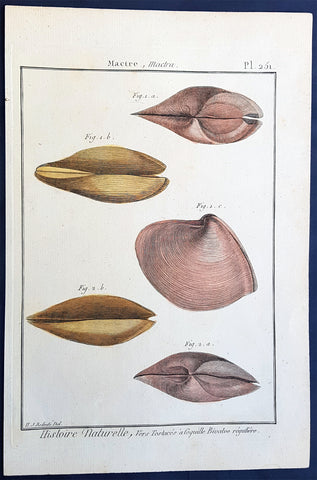1789 Jean Baptiste Lamarck Antique Concology Print, Surf Clam Shells - Pl 251